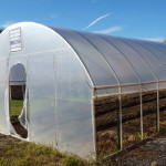 IHS's New Greenhouse: the High Tunnel